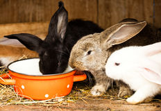 Rabbits' hutch Stock Image