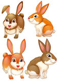 Rabbits royalty free illustration