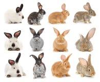 Rabbits. Image of a colorful bunny rabbits royalty free stock image