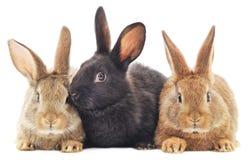 Rabbits. Image of a three bunny rabbits stock photo