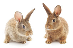 Rabbits. Image of a two bunny rabbits royalty free stock photos