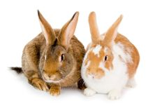 Rabbits isolated Stock Image