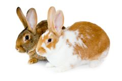 Rabbits isolated Royalty Free Stock Photography