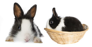 Rabbits. Isolated on a white background Stock Photos