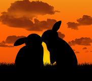 Rabbits kissing at sunset Royalty Free Stock Photos