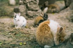 Rabbits. Little bunnies. Rabbits. Art design of cute little bunnies in the zoo stock image