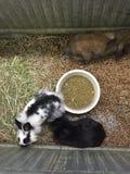 Rabbits Stock Image