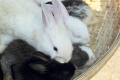 Rabbits lots of cute for sale. Stock Image