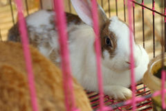 Rabbits lots of cute for sale at the market Royalty Free Stock Image