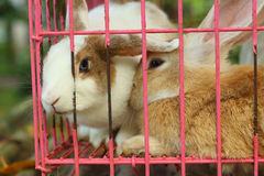 Rabbits lots of cute for sale at the market Royalty Free Stock Photos
