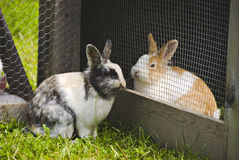 Rabbits in love. Two rabbits looking at each other. Concept of love Stock Image