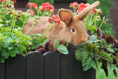 Rabbits love Stock Image