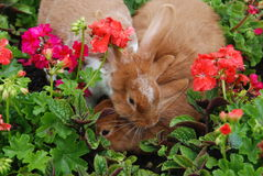 Rabbits love. The blooming flowers Stock Image