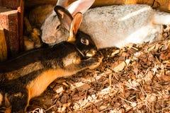 Rabbits. Lovely rabbits sleep together on the hay royalty free stock photo