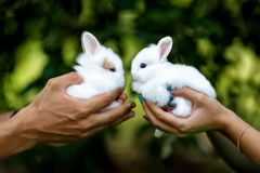Rabbits. Lovers holding on the hands two cute rabbits Royalty Free Stock Photos