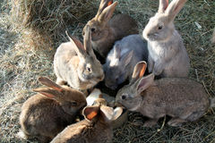 Rabbits at lunch Stock Photos