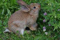 Rabbits on the meadow Stock Photos