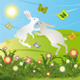 Rabbits on the meadow. Royalty Free Stock Image