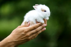 Rabbits. Men holding on the hands two cute rabbits Stock Image