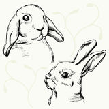Rabbits muzzle sketch Royalty Free Stock Photo