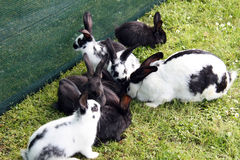 Rabbits outside Royalty Free Stock Photography