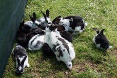 Rabbits outside stock image