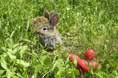 Rabbits on a pasture and red eggs. Little rabbits on a pasture and red eggs Royalty Free Stock Image