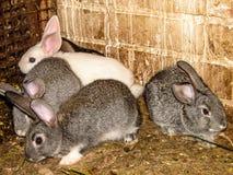 Rabbits. Stock Photo