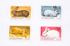 Rabbits on postage stamps Stock Photography