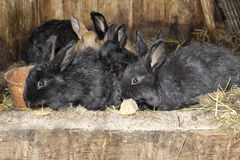 Rabbits in rabbit hutch Stock Photos