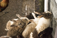 Rabbits. Are in the fence Royalty Free Stock Images