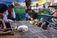 Rabbits Stock Photography