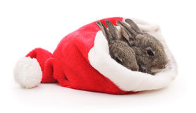 Rabbits in a Santa hat. Royalty Free Stock Photo