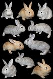 Rabbits a set. Rabbits the set on a black background, is isolated Stock Image