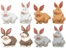 Rabbits vector illustration