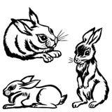Rabbits set Royalty Free Stock Photography