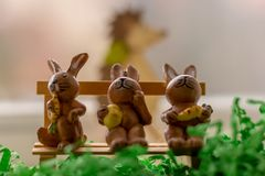 Rabbits sitting on a bench near a window Stock Image