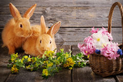 Rabbits with spring flowers Stock Image