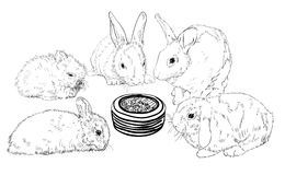 Rabbits surrounding food bowl Stock Photos