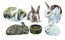 Rabbits surrounding food bowl Stock Photo