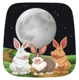 Rabbits. Three cute rabbits sitting under full moon Royalty Free Stock Photo