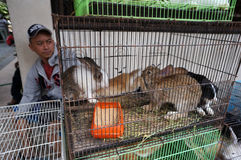 Rabbits. Traders sell rabbits at an animal market in the city of Solo, Central Java, Indonesia Royalty Free Stock Photos