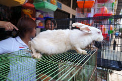 Rabbits. Traders sell rabbits at an animal market in the city of Solo, Central Java, Indonesia Stock Image