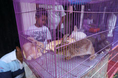 Rabbits. Traders sell rabbits at an animal market in the city of Solo, Central Java, Indonesia Stock Photography