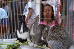 Rabbits. Traders sell rabbits at an animal market in the city of Solo, Central Java, Indonesia Royalty Free Stock Image
