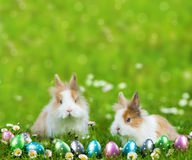 Rabbits Stock Photo