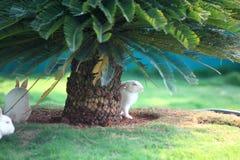 Rabbits under palm tree Royalty Free Stock Photos