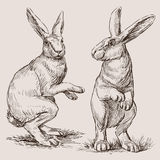 Rabbits. Vector drawing of the easter rabbits Royalty Free Stock Photography
