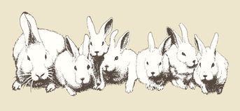 Rabbits. Vector hand drawn family of rabbits Royalty Free Stock Photography