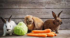 Rabbits with vegetables on wooden background. Funny rabbits with vegetables on wooden background Stock Photography